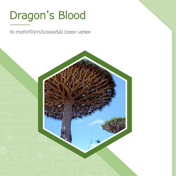 dragons blood คืออะไร
