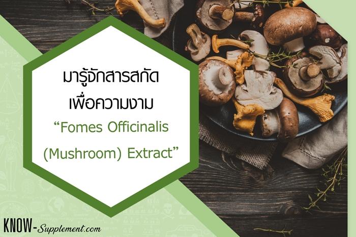 Fomes Officinalis (Mushroom) Extract
